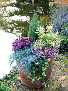 Image result for winter plantenbak