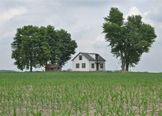 SMALL FARM U.S.A. Where your back yard is a hundred acres of corn. (The average size of a family farm in America is 350 acres.)