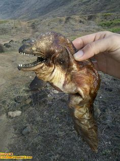 weird creatures of the sea - Bing Images -Looks to be a dead moray eel