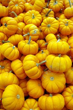 Plenty O' Pumpkins- Explore 10/13 #7 by JebbiePix, via Flickr