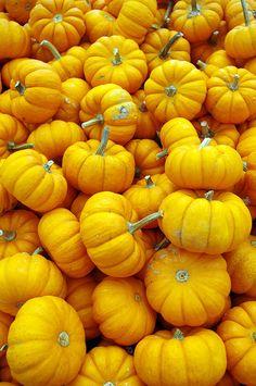 Plenty O' Pumpkins- Explore 10/13 #7 by JebbiePix, via Flickr