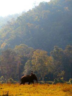 Amazing Elephant Nature Park Chiang Mai Thailand with Hope