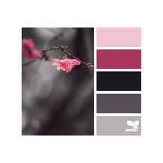 Design Seeds ❤ liked on Polyvore featuring design seeds, colors, backgrounds, color palette and seeds