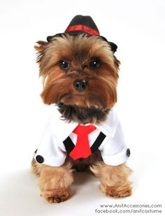 This will make any small male dog look adorable in this two piece gangster dog costume, includes black pinstriped suit vest with red neck tie and adjustable drawstring fedora hat. Easy to wear front closure.  ***This Product Can Only Be Shipped Within the USA***