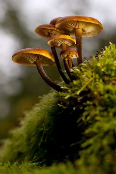 Love watching how Mother Nature recycles the forest with mushrooms and mosses