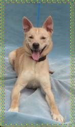 TIARA is an adoptable Retriever Dog in Marietta, GA. � This smiling beauty is Tiara and she is an a mazing dog. She is going to make some new family very happy. Sad her family who taught her so much d...