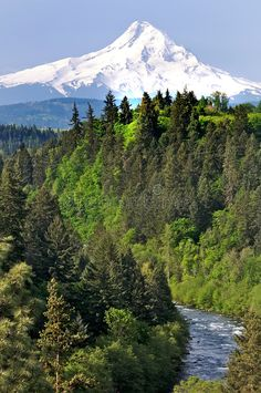 Located in the Pacific Northwest, Mt. Hood is Oregon's tallest mountain, and a possible active stratovolcano. Hood is also known for its hiking trails and ski the slopes. Sunset Photography, Travel Photography, Wonderful Places, Beautiful Places, Mt Hood Oregon, Oregon Nature, Mount Hood, Rainier National Park, Photoshop Photos