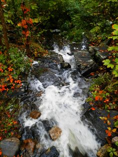 Six Mile Lake Provincial Park Ontario Canada - Autumn Ontario Camping, The Good Place, Waterfall, Wanderlust, Canada, Autumn, Park, World, Places