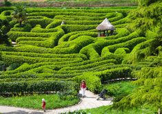 The National Trust owns Glendurgan Maze, Cornwall, UK, which was built in Nestled in a valley, it used a flowing design rather than the more traditional geometric forms in order to deceive the eye. It thus marks a turning point in maze design. Prado, Holidays In Cornwall, Gardens Of The World, Visit Uk, Famous Gardens, Woodland Garden, Love Garden, Garden Pictures, Hedges