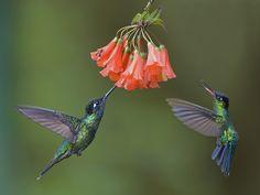 Lo mejor de la Foto del Lector - Abril National Geographic en Español