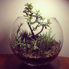 Jade - Glasslands Living Landscapes
