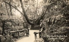 The Fern Dell Gardens, a section of Griffith Park that was developed as a peaceful sanctuary in the 1920s. (Bizarre Los Angeles)