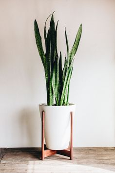 Modernica Case Study Funnel Planter with Wood Stand | http://modernica.net/ceramic-funnel-wood-stand.html