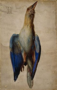 dead blue roller, Albrecht Durer, via Flickr