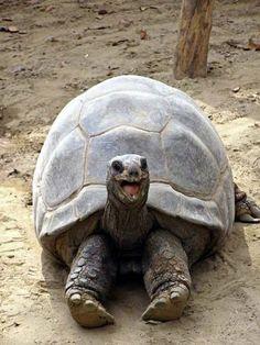 Giant Tortoise Is Happy! | Cutest Paw