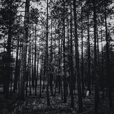 """""""Into the woods."""" Photo taken by @ayanah on Instagram, pinned via the InstaPin iOS App! http://www.instapinapp.com (06/25/2015)"""