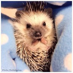 """""""Now I lay me down to sleep…""""   A Day In The Adorable Life Of Turbo The Hedgehog"""