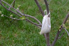 Deer Away, Natural organic deer repellent fruit trees, Prevent Deer from Eating Apple Trees {natural organic deer repellant}   Whole-Fed Homestead