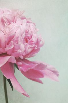 'pale pink' by Iris Lehnhardt - loving this lady's work right now!