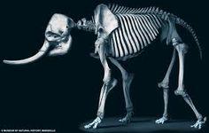 animal skeletons - Google Search