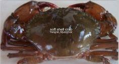 Aung Moe Khine Manufacturing Co. Soft Crab, Soft Shell Crab, Shells, Beef, Food, Conch Shells, Meat, Seashells, Essen