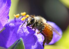 Bees May be More Important Than Fertilizer