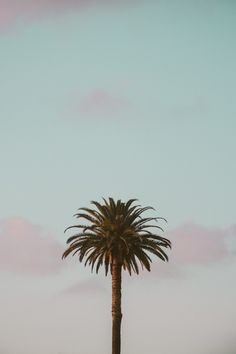 green palm tree iPhone 11 case cover and wallpaper – Case and Wallpaper for iPhone Wallpaper Animes, Tree Wallpaper, Iphone Background Wallpaper, Girl Wallpaper, Aesthetic Iphone Wallpaper, Aesthetic Wallpapers, Wallpaper Lockscreen, Cellphone Wallpaper, Iphone Wallpapers