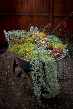 Seasonal Wheelbarrow with succulents.