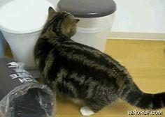 News Cat Gifs! | When nobody watches my livestream