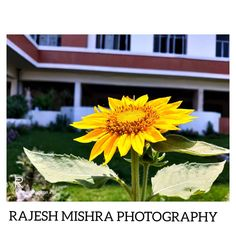 Mobile Photography @rrm__photography @realmeindia @mobile_photographyofficial #photo #photos #pic  Mobile Photography @rrm__photography @realmeindia @mobile_photographyofficial #photo #photos #pic #pics #picture #pictures #snapshot #art #beautiful #instagood #picoftheday #photooftheday #color #all_shots #exposure #composition #focus #capture #moment Mobile Photography, Composition, Shots, In This Moment, Pictures, Plants, Beautiful, Color, Art