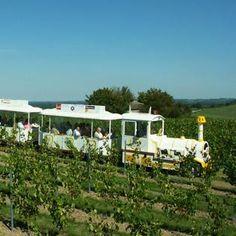 Train touristique de Chalonnes-sur-Loire / Tourist train in the vineyard of the Loire Valley