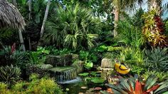 It's no wonder why many people want to have a tropical garden. Whenever you hear someone referring to a garden with this style, your mind will instantly be enveloped with a romantic and exotic place that looks very much relaxing…