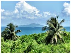 Puerto Rico, Conservation, Island, Water, Outdoor, Bioluminescent Bay, Natural Resources, Palmas, News