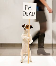 Installation view of 'I'm Dead' by David Shrigley, 2010 at the Hayward Gallery