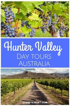 A day trip to the Hunter Valley north of Sydney is a great choice for foodies wanting to see a little more of the country and experience some of the best wines of the region.