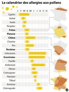Le calendrier des allergies aux pollens en France
