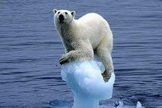 ice berg - Google Search