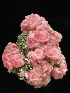 Rose of the Incas, S