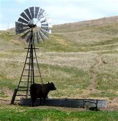 drank cool ,fresh and clean water from Windmill in sandhills of Nebraska