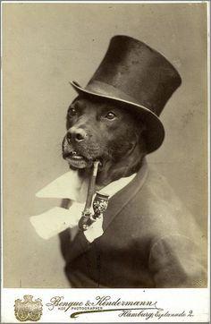 Portrait of a Dog as a German Gentleman