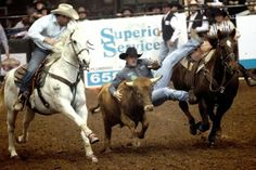 Nick Guy leaps from his horse to wrestle a steer at the 82nd annual San Angelo Stock Show and Rodeo.
