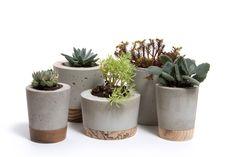 Items similar to Mini Concrete Planter - Pine Base on Etsy Concrete Crafts, Concrete Projects, Wood Planters, Concrete Planters, Planter Pots, Pirate Decor, Small Artificial Plants, Cement Art, Interior Design Boards