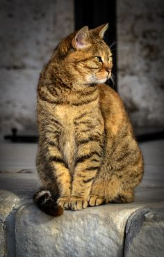 He's positively saintly.  //A Devout Cat Lives At The Hagia Sophia In Istanbul