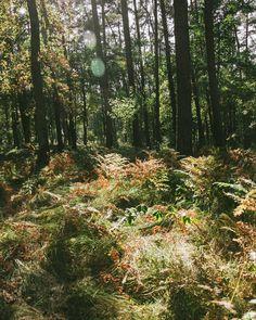 Polish autumn | #krakow #igerskrakow #nature #fall #autumn #somewheremagazine #oystermagazine #ifyouleave #theweekoninstagram #myfeatureshoot #HSdailyfeature #streetdreamsmag #vsco #phornography #thisveryinstant #ourmomentum #eikyomag #photozine #autumn #phroommagazine #botanical #wild  #woods #my365 #inspiration #colours #travel #shotoniphone6