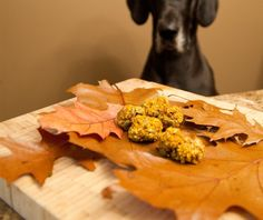 chuches de otoño para perros con calabaza y canela