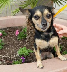 Ana adoptable dog of the week #pawpromise