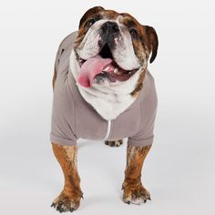 American Apparel sweatshirt for dogs :)