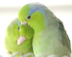 Feathered Luv