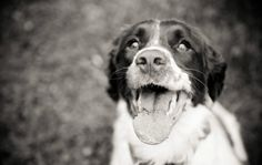 The Pet Anthology | 30 Inspirational Pet Photographers | Beth McHenry Photography   #pet #photography