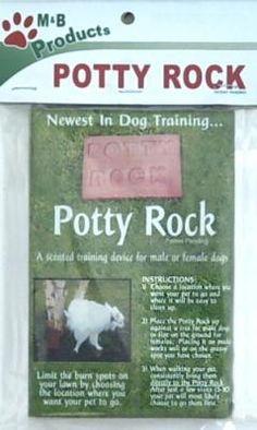 How to potty train 5 year old dog umuarama